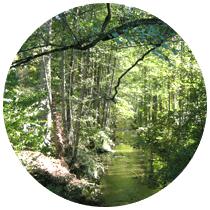 """Fortbildung: """"Folge deinem Weg"""" intuitives Bogenschießen und initiatische Prozeßbegleitung mit www.abenteuer-lernen.net"""